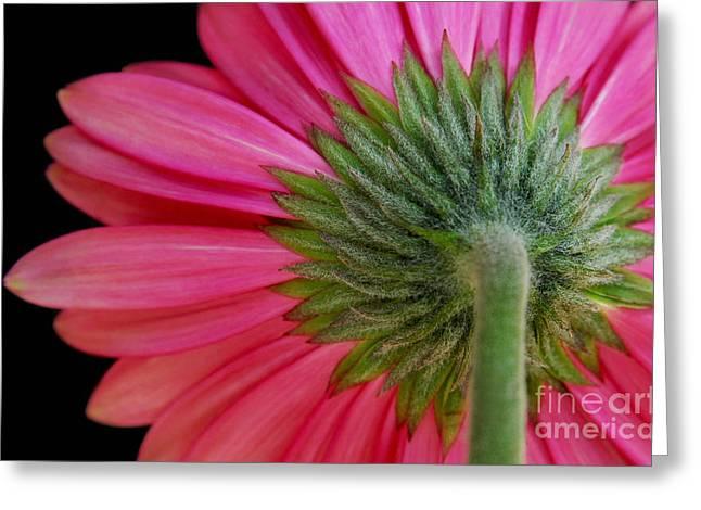 Holm Greeting Cards - Shy Flower Greeting Card by Dan Holm