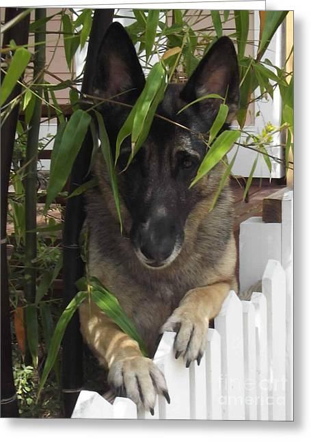 Bamboo Fence Greeting Cards - Shy Gaurdian Greeting Card by Lori-Anne Fay