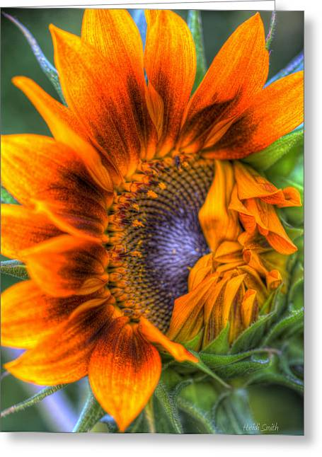 Sunflower Seeds Greeting Cards - Shy Girl Greeting Card by Heidi Smith