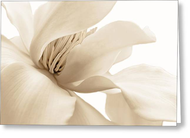 Magnoliaceae Greeting Cards - Shy Magnolia Blossom Soft Brown Greeting Card by Jennie Marie Schell