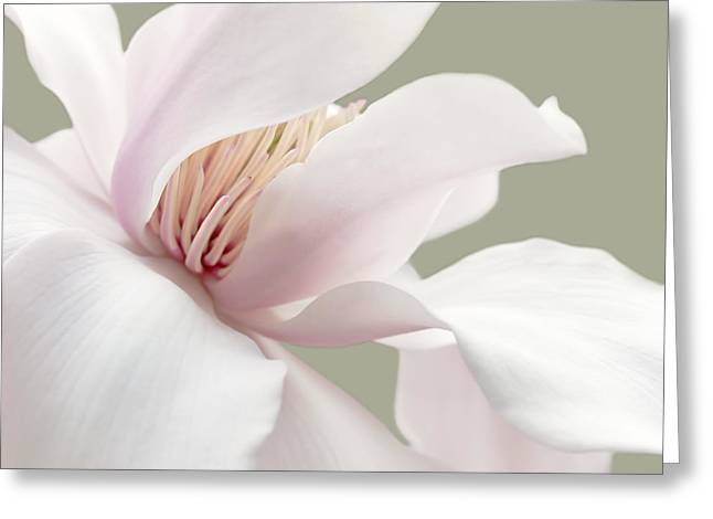 Shy Magnolia Flower Blossom Greeting Card by Jennie Marie Schell