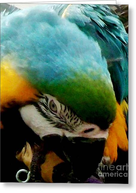 Gold Buyer Greeting Cards - Shy Parrot Greeting Card by Gail Matthews