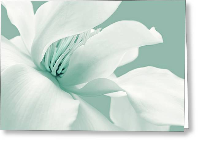 Magnoliaceae Greeting Cards - Shy White Magnolia Blossom Teal Greeting Card by Jennie Marie Schell