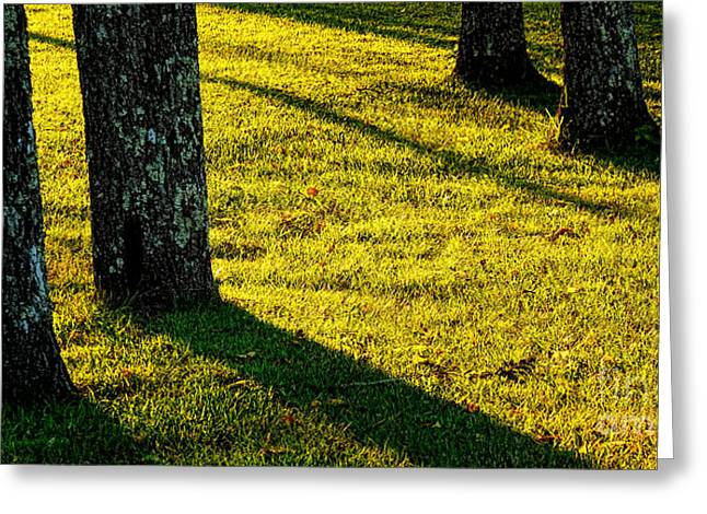 Warm Light Greeting Cards - Shyness Greeting Card by Olivier Le Queinec
