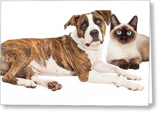 Breeds Greeting Cards - Siamese Cat and Mixed Breed Dog Greeting Card by Susan  Schmitz