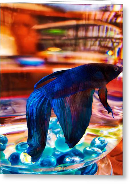 Siamese Fighting Fish Greeting Cards - Siamese Fighting Fish 2 Greeting Card by Dawn Eshelman