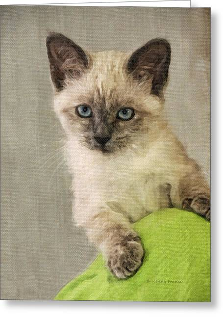 Siamese Kitten Greeting Card by Kenny Francis