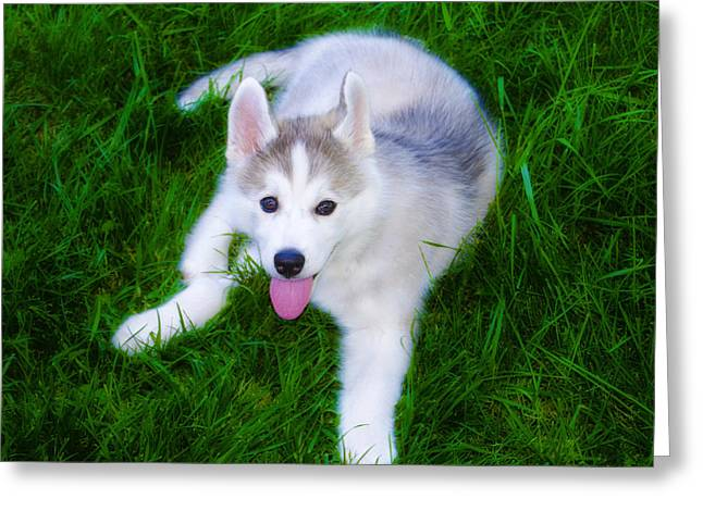 Puppies Digital Art Greeting Cards - Siberian Huskie Greeting Card by Bill Cannon