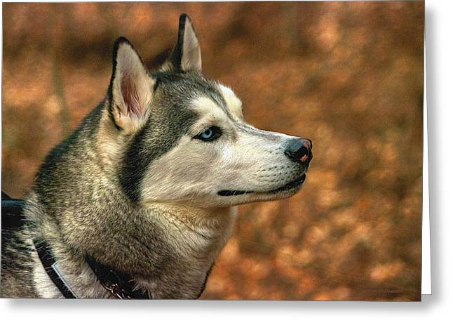 Working Dog Greeting Cards - Siberian Husky Greeting Card by Dennis  Baswell