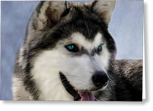 Siberian Husky Greeting Card by Linsey Williams