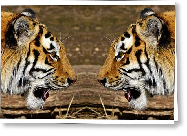 Prison Stripes Greeting Cards - Siberian tiger double portrait face to face Greeting Card by Toppart Sweden