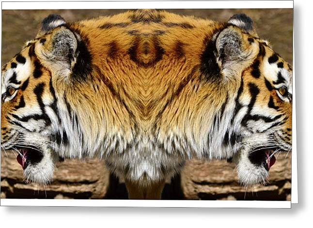 Prison Stripes Greeting Cards - Siberian tiger double portrait  Greeting Card by Toppart Sweden