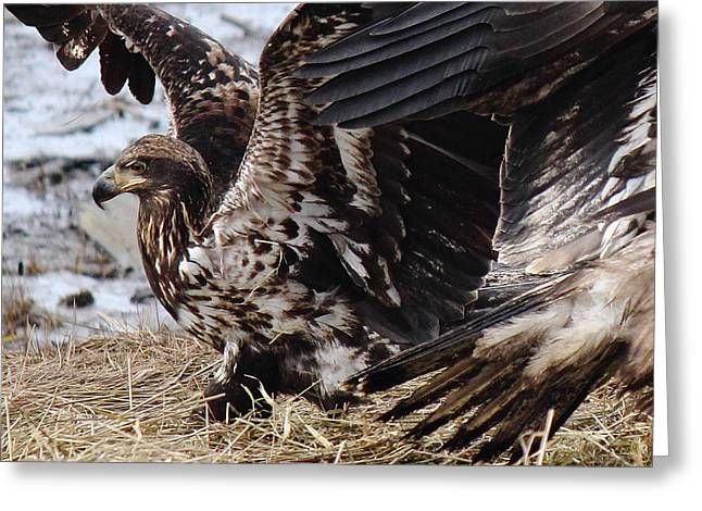 Flying Eagles Greeting Cards - Siblings Greeting Card by Randy Hall