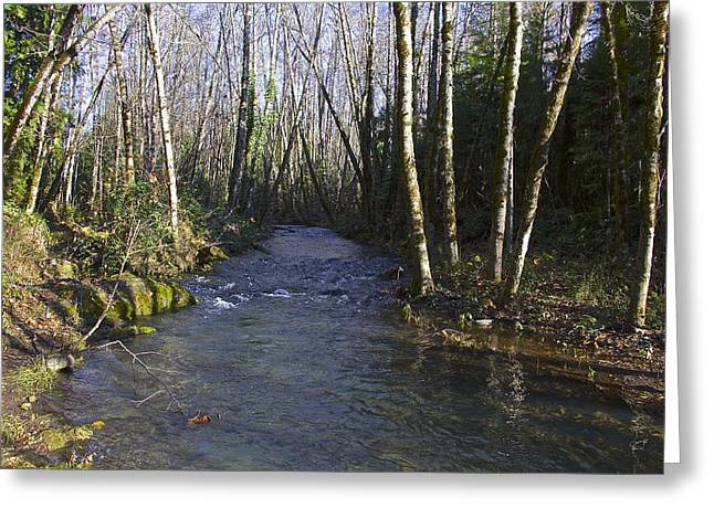 Side Creek Greeting Card by Tim Rice