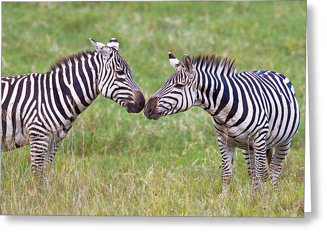 Zebra Face Greeting Cards - Side Profile Of Two Zebras Touching Greeting Card by Panoramic Images