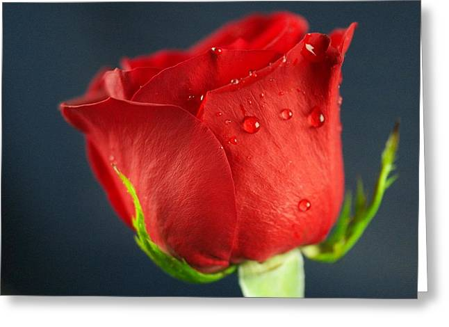 Wet Rose Greeting Cards - Side view of a wet rose Greeting Card by Jeff  Swan
