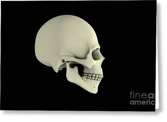 Side View Of Human Skull Greeting Card by Stocktrek Images