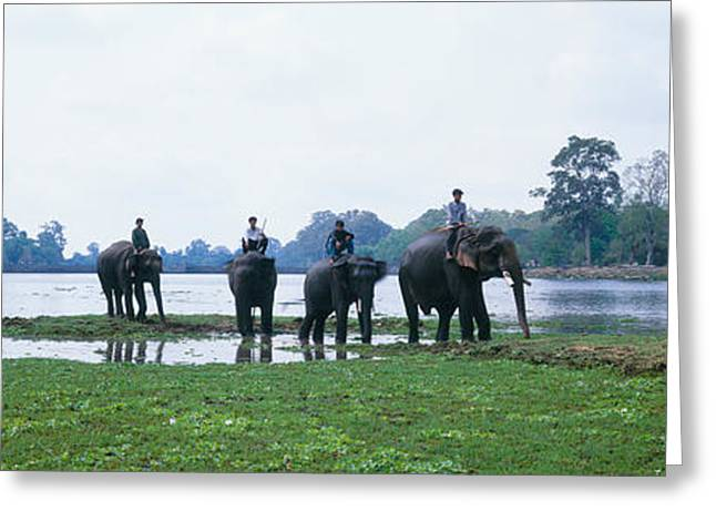 Southeast Asia Greeting Cards - Siem Reap River & Elephants Angkor Vat Greeting Card by Panoramic Images