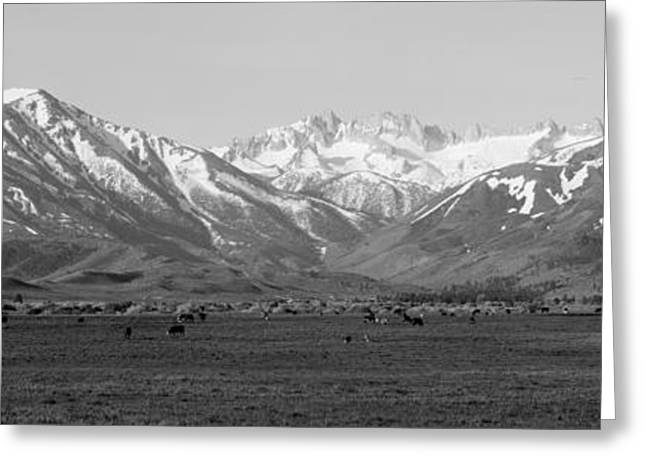 Grazing Snow Photographs Greeting Cards - Sierra Mountains, California Greeting Card by Panoramic Images