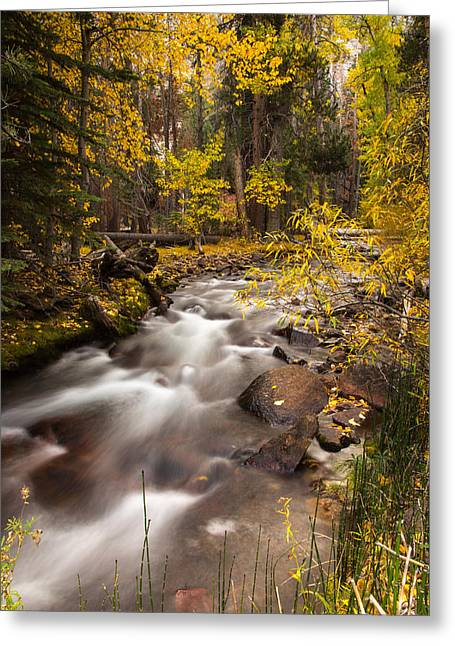 Vine Leaves Greeting Cards - Sierra Nevada Fall Greeting Card by Peter Tellone