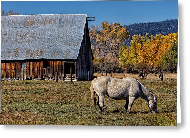Old Fence Posts Digital Greeting Cards - Sierraville Horse Greeting Card by Kathleen Bishop