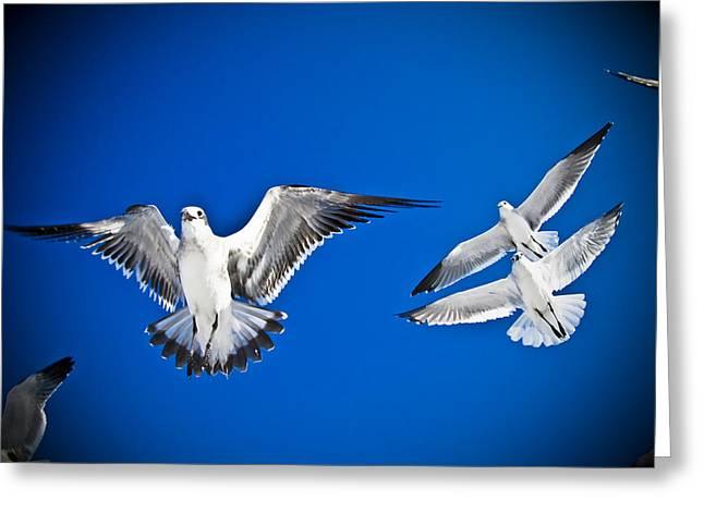 Siesta Key Sea Gulls Greeting Card by Andrea Floyd