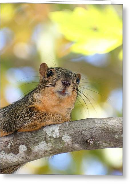 Fox Squirrel Greeting Cards - Sight Seeing Greeting Card by Ester  Rogers