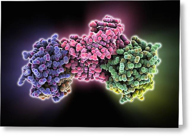 Signal Recognition Particle Domain Greeting Card by Science Photo Library