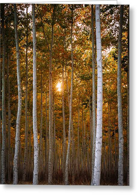 Colors Of Autumn Greeting Cards - Signs of Autumn Greeting Card by Dan Mihai