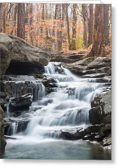 Falling Water Creek Greeting Cards - Signs of Spring at Moss Rock Preserve Greeting Card by Parker Cunningham
