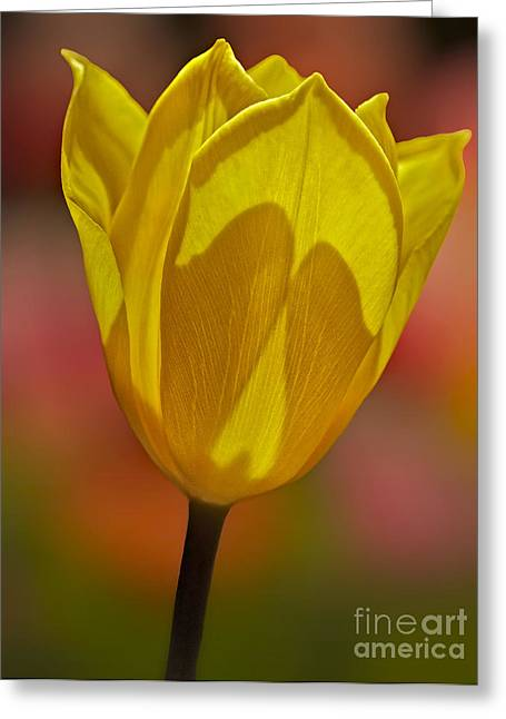 Botanical Greeting Cards - Signs of Spring Greeting Card by Susan Candelario