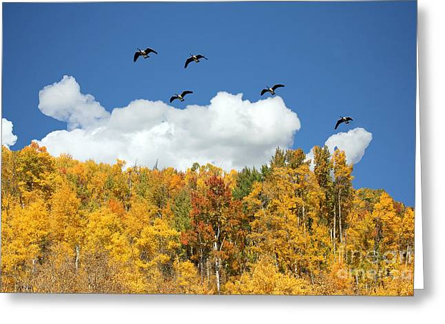 Bird Summit Greeting Cards - Signs of the Season Greeting Card by Bob Hislop