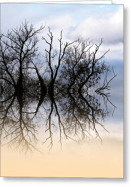 Bare Trees Greeting Cards - Signs of Winter Greeting Card by Sharon Lisa Clarke
