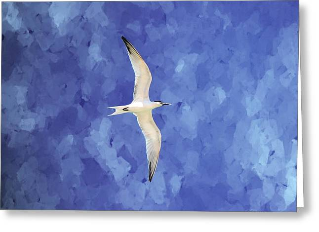 Tern Digital Art Greeting Cards - Silence Greeting Card by Barbara Chichester