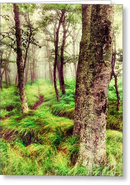 Paint Photograph Greeting Cards - Silence in the Mist II Greeting Card by Dan Carmichael