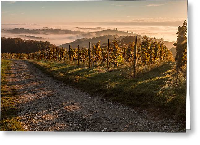 Vineyard Landscape Photographs Greeting Cards - Silence is golden Greeting Card by Davorin Mance