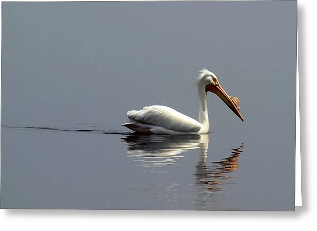 Menasha Greeting Cards - Silent and Reflective Greeting Card by Thomas Young