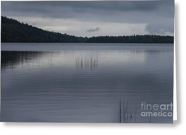 Pond In Park Greeting Cards - Silent lake Eagle Greeting Card by Patricia Hofmeester