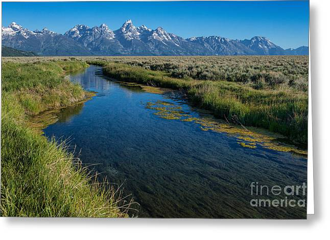 Silent Pathway To The Grand Tetons Greeting Card by Sandra Bronstein