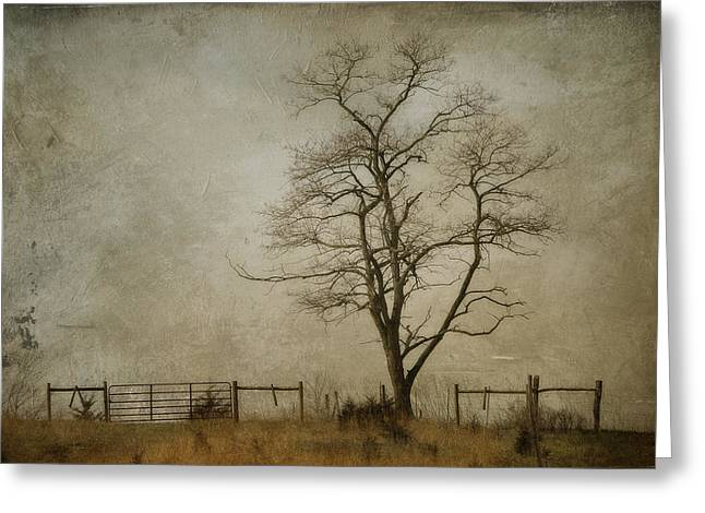 Kathy Jennings Photographs Greeting Cards - Silent Solitude Greeting Card by Kathy Jennings