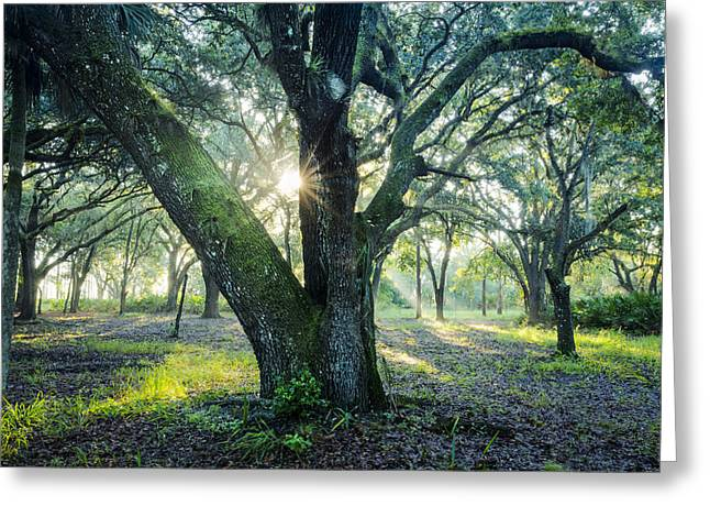 Oak Hammocks Greeting Cards - Silent Strength Greeting Card by Debra and Dave Vanderlaan