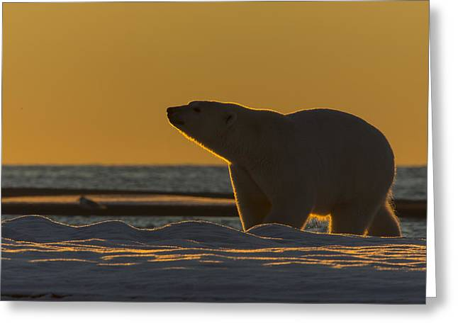Silhouette In Gold Greeting Card by Tim Grams