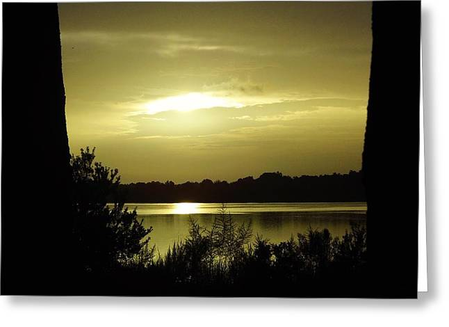 Trees Reflecting In Water Greeting Cards - Silhouette Morning Greeting Card by D Hackett