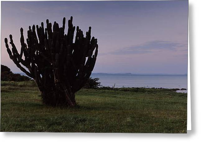 Horizon Over Water Greeting Cards - Silhouette Of A Cactus At The Lakeside Greeting Card by Panoramic Images