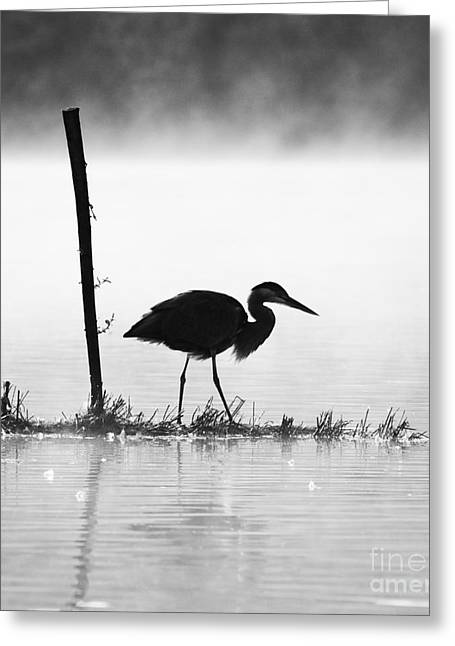 Silhouettes Greeting Cards - Silhouette of a heron Greeting Card by Richard Garvey-Williams