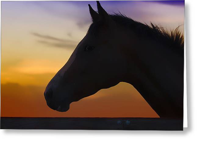 Silhouette Of A Horse At Sunset Greeting Card by Wolf Shadow  Photography
