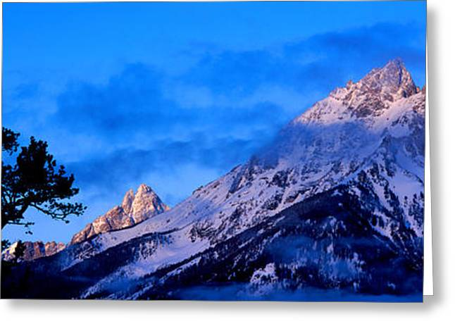 Mountain Greeting Cards - Silhouette Of A Limber Pine Pinus Greeting Card by Panoramic Images