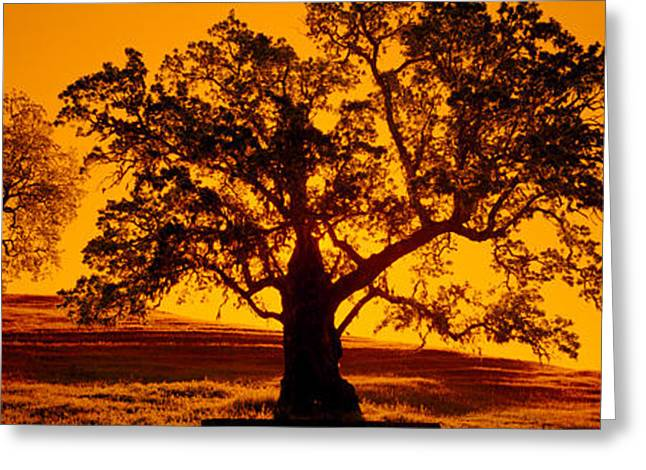 Central Coast Greeting Cards - Silhouette Of California Oaks Trees Greeting Card by Panoramic Images