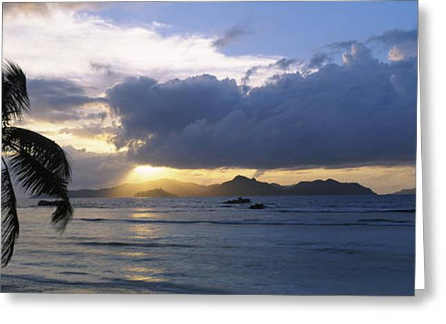 Coconut Palms Greeting Cards - Silhouette Of Coconut Palm Tree Greeting Card by Panoramic Images
