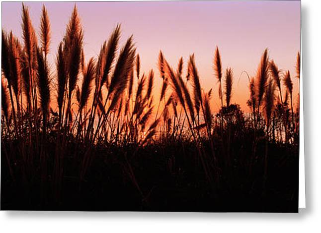 Big Sur California Photographs Greeting Cards - Silhouette Of Grass In A Field At Dusk Greeting Card by Panoramic Images